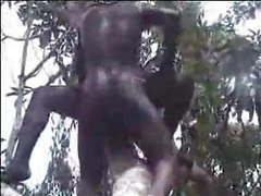 African amateur fuck on the tree videos