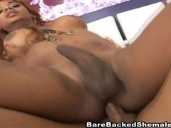 Black shemale loves hard bareback movies at kilotop.com